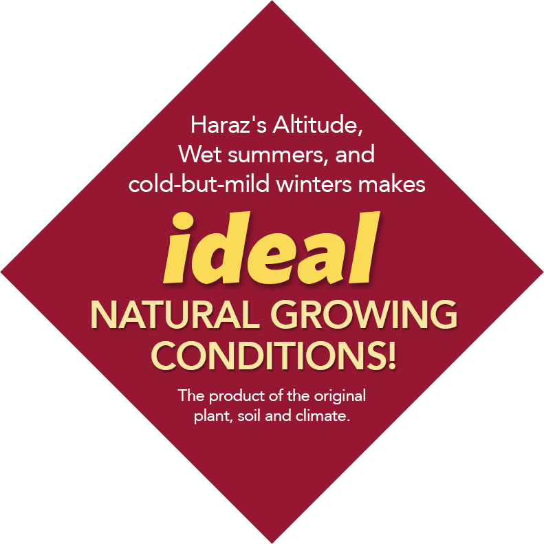 Ideal Natural Growing Conditions
